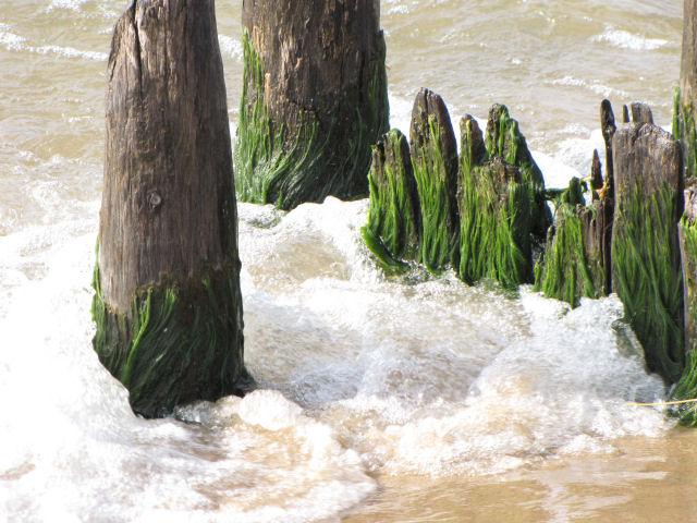 algae on pilings with foam