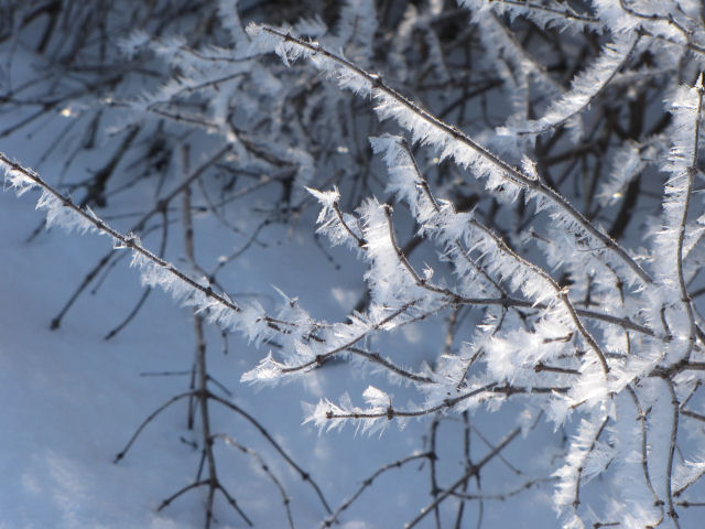 hoarfrost on branches