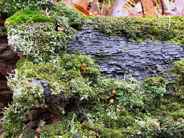 moss and mushrooms on dark log