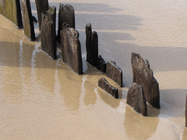 reflection of pilings