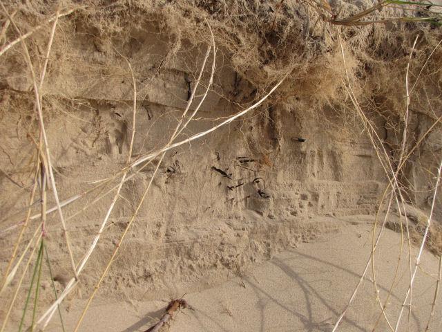 sandy wall