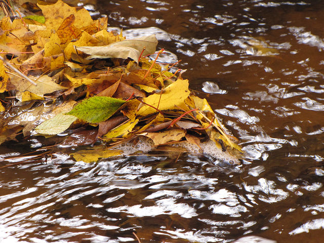 yellow leaves by stream