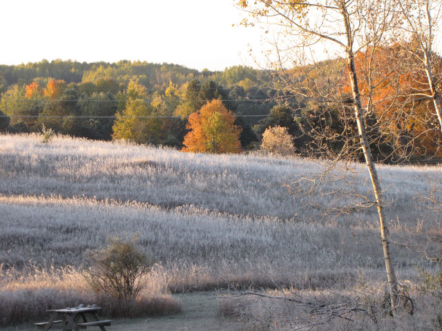 autumn field covered in frost